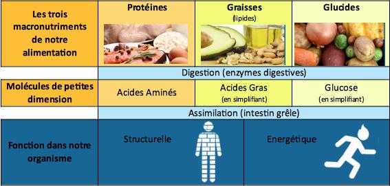 Tableau des types de nutriments, Retrouver son poids et son appétit, MNT